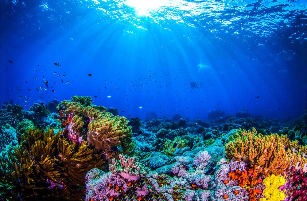 Descubren cinco arrecifes en Tuxpan y Antón Lizardo