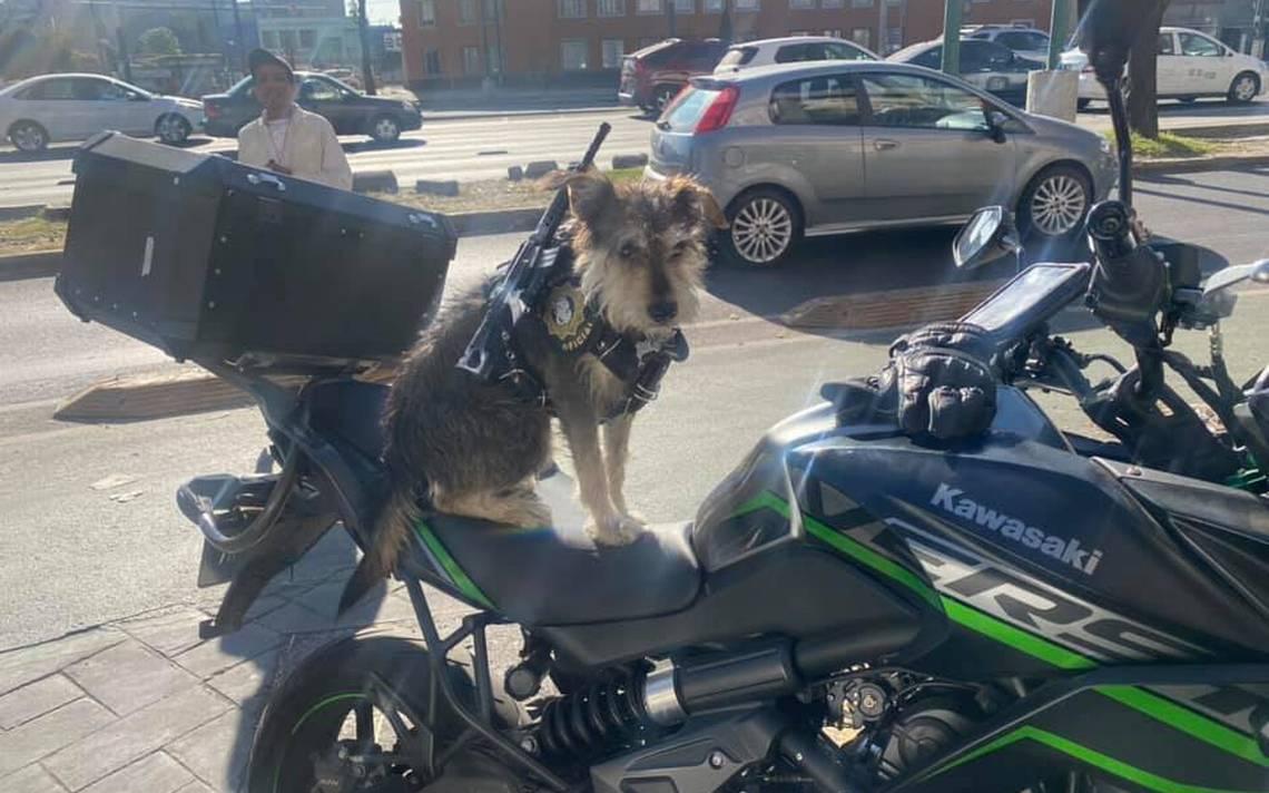 """Panadería de CdMx contrata a """"Spike"""", un perro, como guardia de seguridad"""