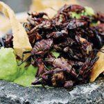 """""""El Arte de Comer Insectos"""": Oaxaca presente en exposición"""