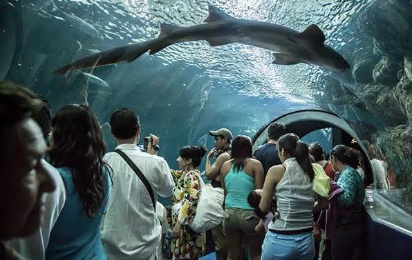Por Coronavirus cierran temporalmente El Acuario y el Parque Acuático Inbursa.