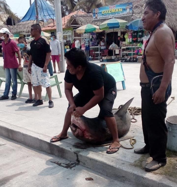 Pescadores capturan un tiburón en Villa del Mar.