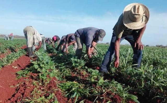 Campesinos mueres de Covid por falta de hospitales en zona rural.