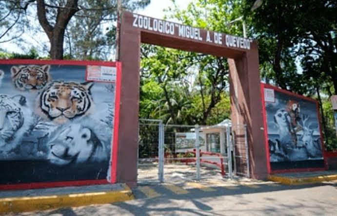 PROFEPA tiene 18 animales bajo resguardo en el zoológico de Veracruz.