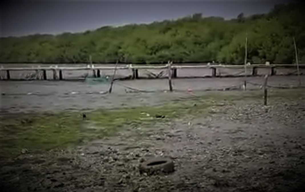 Amanece Laguna de Arbolillo en Alvarado, Veracruz seca