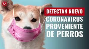 Detectan Covid de origen canino en Malasia