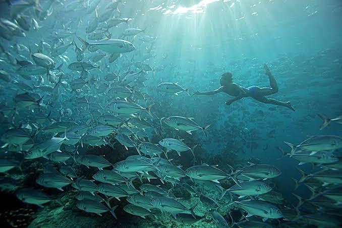 Los bajau, la tribu que mutó y puede sumergirse 60 metros bajo el mar