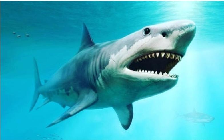 Se hace viral tiburón gigante en el Atlántico.