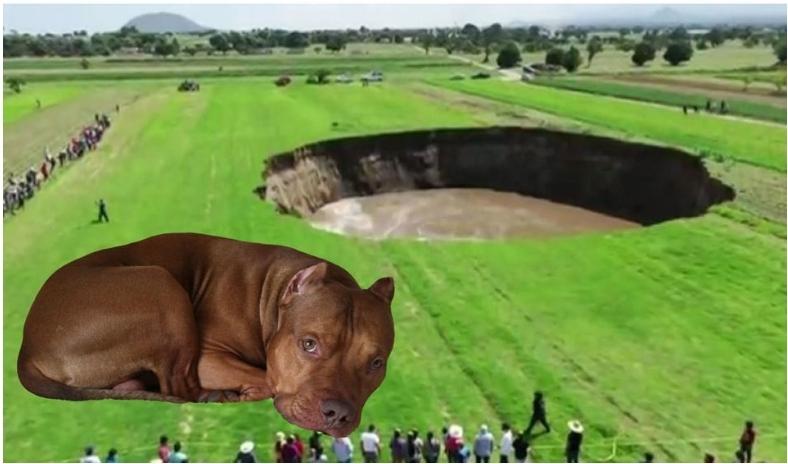 Perrito cae a socavón en Puebla, Gobierno no quiere rescatarlo.