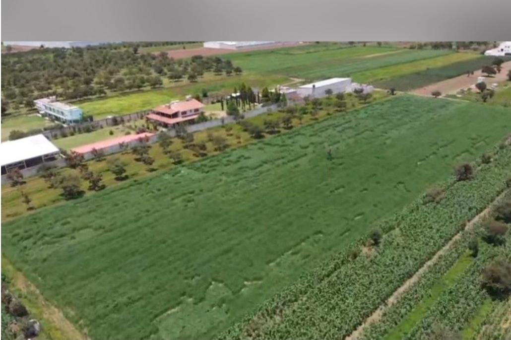 Aparecen señales extrañas en cultivos de Zacatepec
