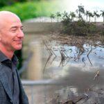Jeff Bezos apoyará restauración de manglares de México